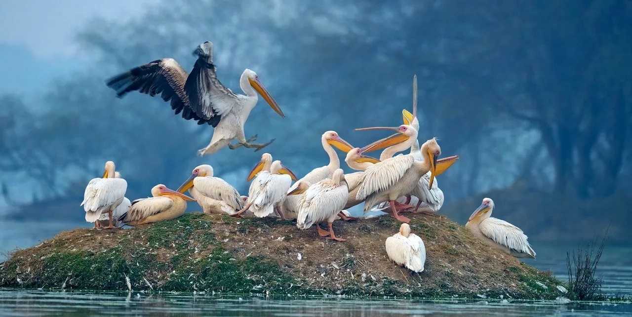 Bharatpur Photo Tour