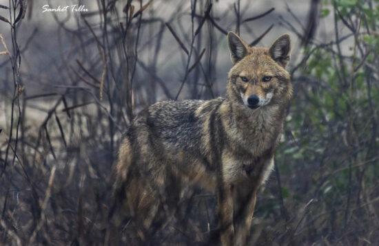 Wildlife Photo Tour - Pench