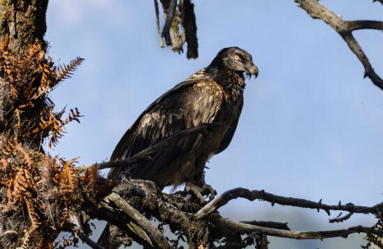 Nature Mosaics' Chopta & Sattal Birding Tour